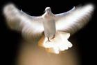 paz interior interna libre identidad existencia juzgar criticar conflicto preocupación ego